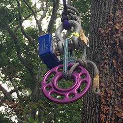 wireless loadshackle used in tree climbing competition